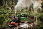 墨尔本 百年复古蒸汽小火车 穿越原始森林+Brighton 海滩彩虹小屋一日游 Puffing Billy
