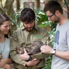 悉尼 费瑟戴尔野生动物园门票(Featherdale Wildlife Park)蓝山附近 自驾推荐