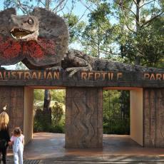 悉尼中央海岸爬行动物园 (可抱考拉、喂鹦鹉)Australian Reptile Park